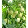 大量储存各种瓜果蔬菜