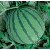湖北钟祥长寿有大量黑美人,花瓜等优质西瓜供应,皮毛好看,脆甜