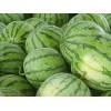 大量供应优质西瓜及白瓤西瓜 0.55元/斤