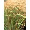 最具有口碑的农作物种植开发江苏省提供    ,油料专卖店