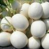 甜瓜 景甜系列 白皮 品质有保障