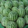 西瓜0.78元/斤包甜(广东阳江)