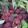 杨梅 新鲜水果