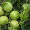 代购代销各种季节性水果南方为主
