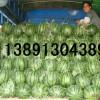 陕西京新西瓜种植基地,大棚京新西瓜产地批发最新价格