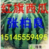 黑龙江省绥化市北林区红旗西瓜代办张柏良
