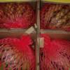 东莞水果批发市场