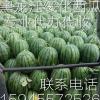 黑龙江绥化市红旗乡刘升西瓜代收中心