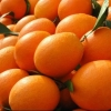 湖北脐橙秭归脐橙纽荷尔脐橙长红脐橙