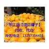 东江湖蜜桔柑橘代办