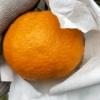 棚柑。纽荷挤橙。耙耙柑。