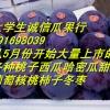陕西大棚李子六月上市陕西油桃产地批发