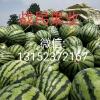 甜王西瓜,金城五,黑无籽,京欣,早冠农供应