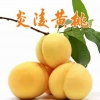 湖南炎陵:黄桃再丰收