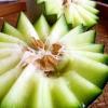 海阳网纹瓜