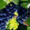 长沙红星水果批发市场葡萄,荔枝,砂糖橘,西瓜代购代销