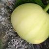 桂林全州枧塘香瓜