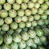 代卖全国各种水果,四川雨润国际农产品交易中心