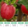 华硕苹果8月中旬上市  欢迎预定  基地直供