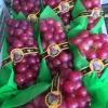 巨峰水晶葡萄