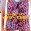 红提葡萄产地价格
