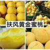 陕西省宝鸡市黄金蜜黄桃