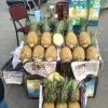 优质菠萝自有产地