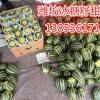 山东潍坊甜瓜批发中心 羊角蜜甜瓜供应