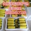 山东潍坊甜瓜批发 羊角蜜甜瓜产地 博洋九甜瓜供应