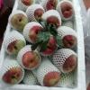 东莞果菜市场代卖