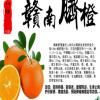 赣南脐橙自产果园批发零售!