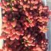 克伦生葡萄